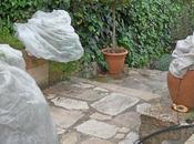 Protection d'hiver pour plantes fragiles