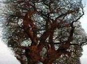 Traitement Acouphènes Naturothérapie (2ème partie)
