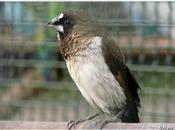 Oiseaux exotiques Jardin Thabor Rennes (1/4)