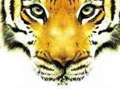février fête amis l'année tigre