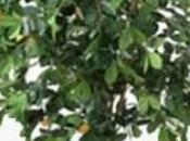 2010 l'arbre twitte Ericsson