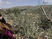 Rapport violations israéliennes droits humains