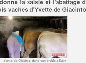 Billancourt trois vaches d'Yvette