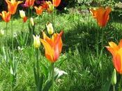 Emily Dickinson, poétesse Nature, nous aide dans...