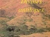 Alain Emery Divines antilopes