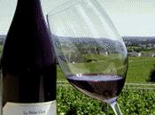 Domaine Yannick Amirault Vins Loire