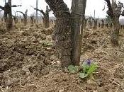 violette charrue