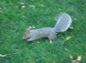 écureuils central park sont tristes lundi