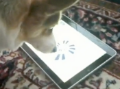 Inclassable iPad iDog [Vidéo]
