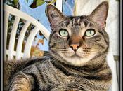 Portrait chat Azor