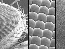 Microscope Electronique Balayage