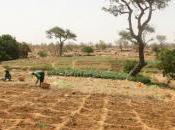 changement climatique menace sécurité alimentaire Afrique
