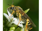Insectes loupe muséum d'histoire naturelle