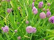 Semaine sarthoise (flore locale)