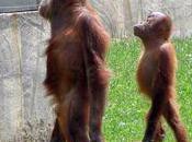 Photos parc zoologique Boissière Doré