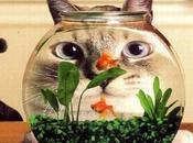 poisson realite augmente EXMAR
