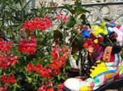 fleurs bien chaussées