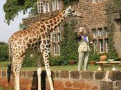 Hôtel lodge Kenya sauvez girafes