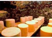 biodiversité microbienne fromages lait