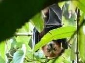 Biodiversité faune Réunion hautement menacée