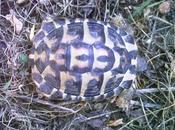 Notre nouvel arrivant Hermann tortue