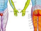 bombe anatomique