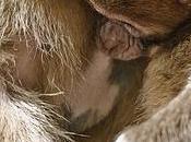 D-Clic Monkeys