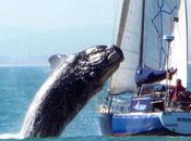 baleine saute bateau pleine