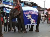 Jumeaux elephants thailande