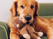 Maman veux chien