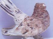 Séparer jeunes pigeons adultes.