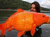 pêche poisson rouge