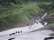 Névés, yacks, cabanes, cascades basket (Vallée Nujiang, 4/?)