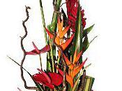 jardin d'iris, Interflora Fort France Martinique