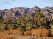 Deux fois plus dattes Ouarzazate dans Vallée Draâ