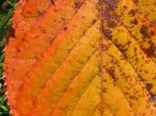 feuilles mortes ramassent
