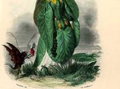 Nénuphar (J.J. Grandville)
