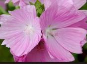 plus belles fleurs l'été!
