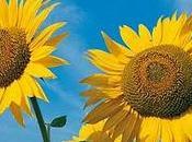 Prolongez l'été grâce luminothérapie!