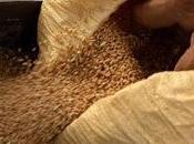 perte biodiversité végétale menace sécurité alimentaire