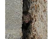 montagne accouche d'une souris