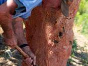 Roussillon fait liège durable pour bouchons bouteilles