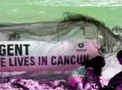 Environnement Cancun… climat minima