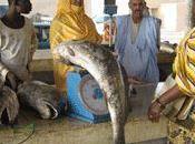 Consommation poisson volatilise Yaoundé