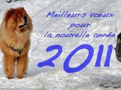 nouvelles résolutions janvier seront-elles toutes tenues 2011
