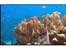 Sauver massifs coralliens...