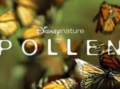 Pollen monde fleurs pollinisateurs