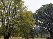 "château Versailles propose particuliers d'""adopter"" tilleuls"