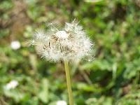 astuces pour éliminer mauvaises herbes jardin