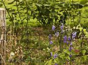 Harmoniser jardin avec l'environnement